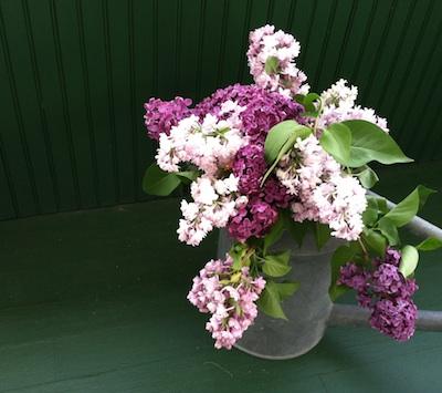 Lilacs3