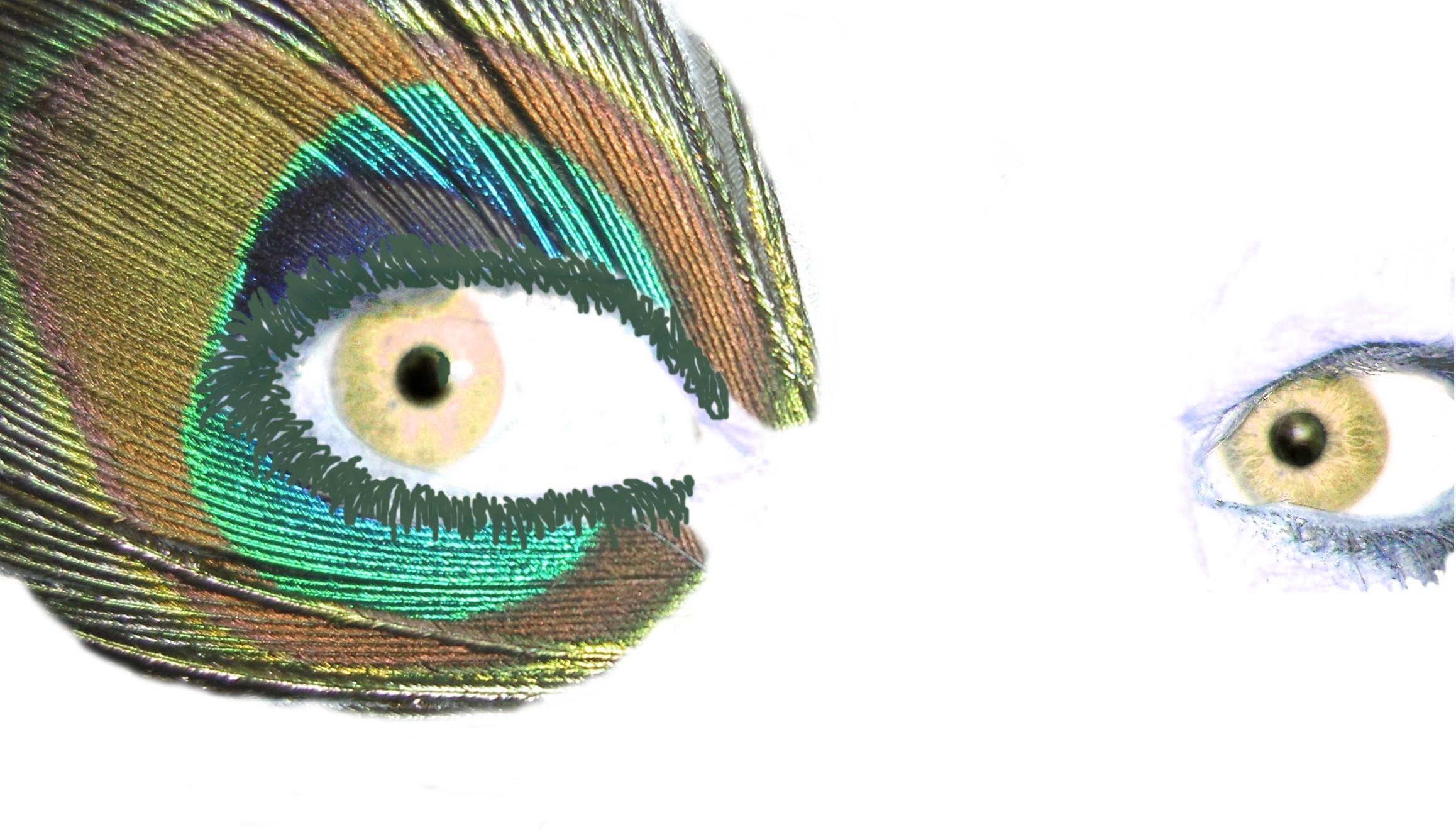 golden_eyes_peacock
