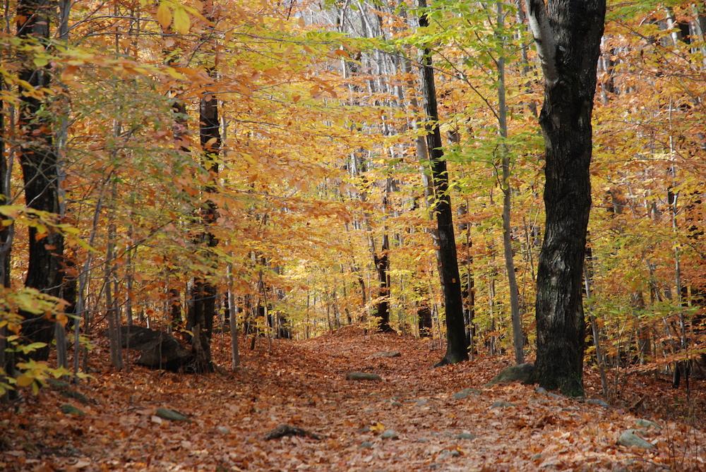 autumn-path-fall