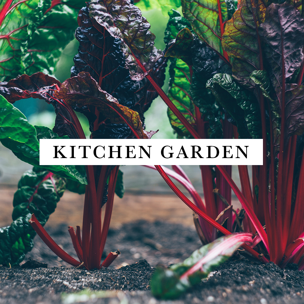 KITCHEN GARDEN.jpg