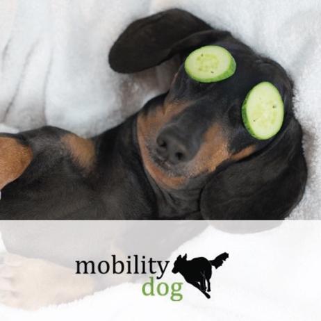 mobility dog - Bewegungstherapie für Ihren HundPatrick Gisin079 796 58 59info@mobility-dog.chwww.mobility-dog.ch