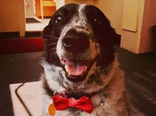 Pet Supplies - Because dogs need bowties