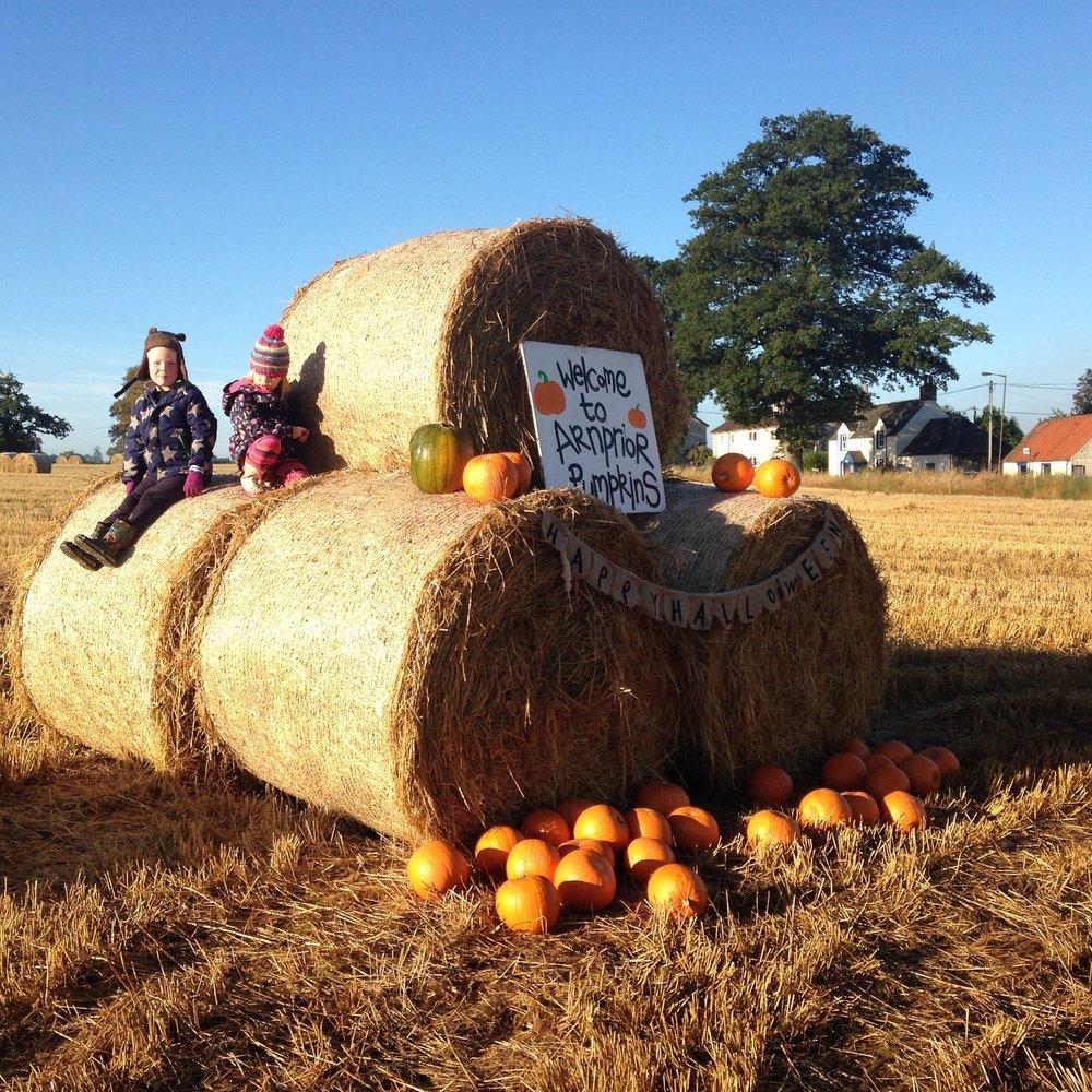 Arnprior Pumpkins 3