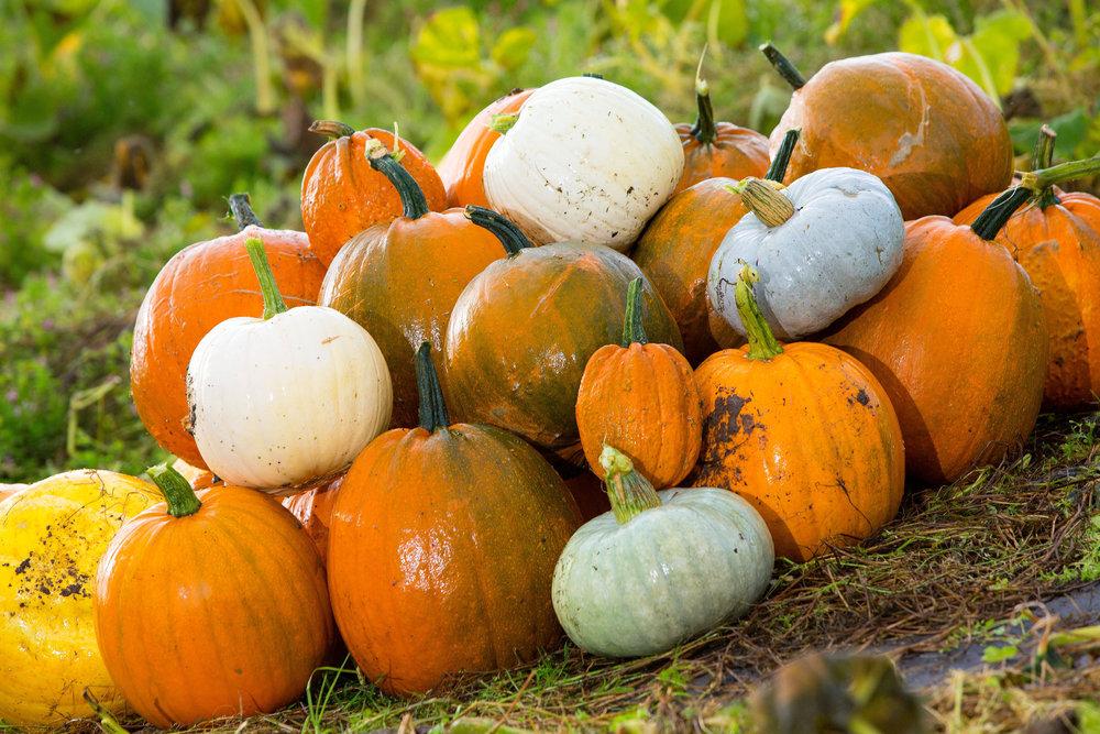 Arnprior Pumpkins_27.jpg