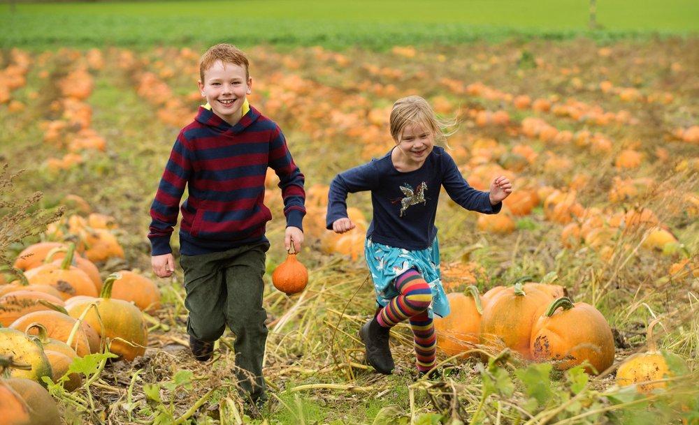 Arnprior Pumpkins 1