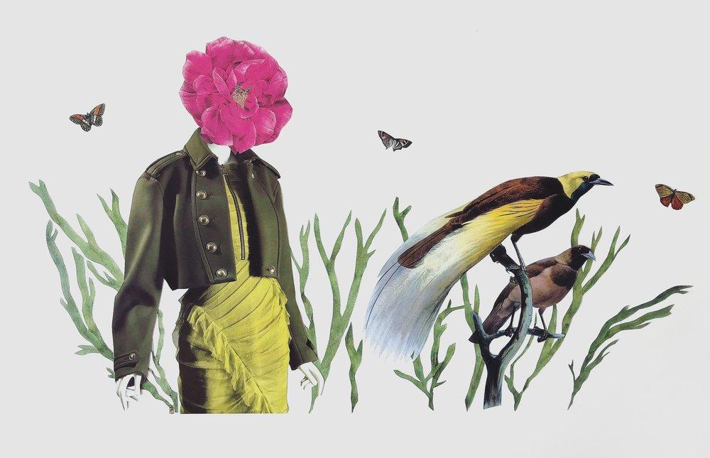 Birdofparadiselargewebedit.JPG