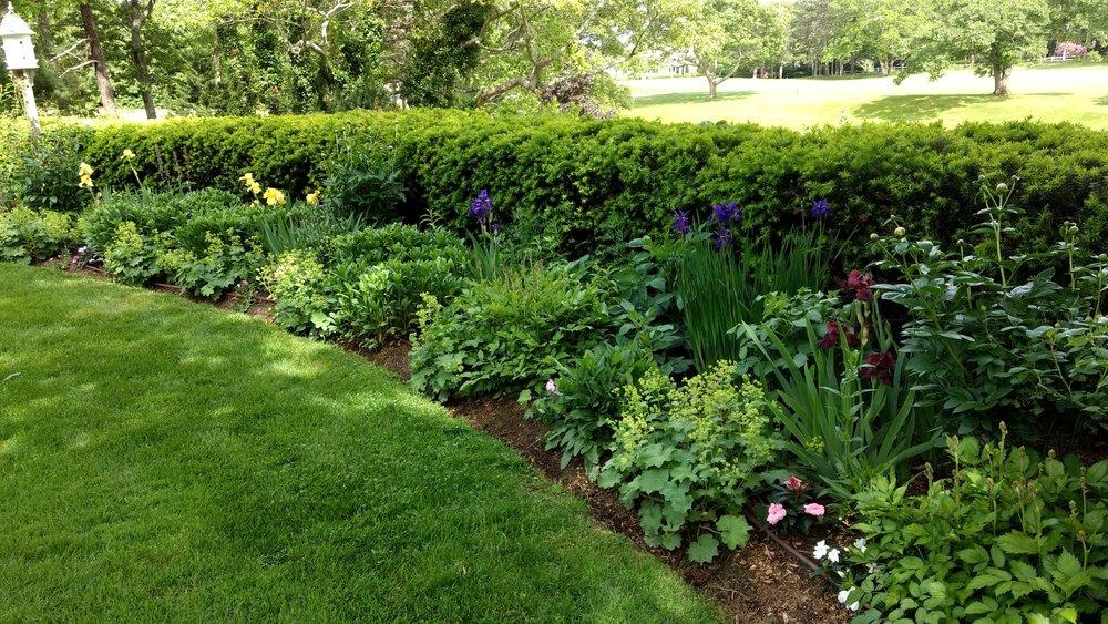 Backyard Border Garden