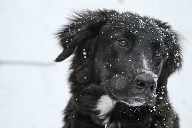border-collie-1149417_640.jpg