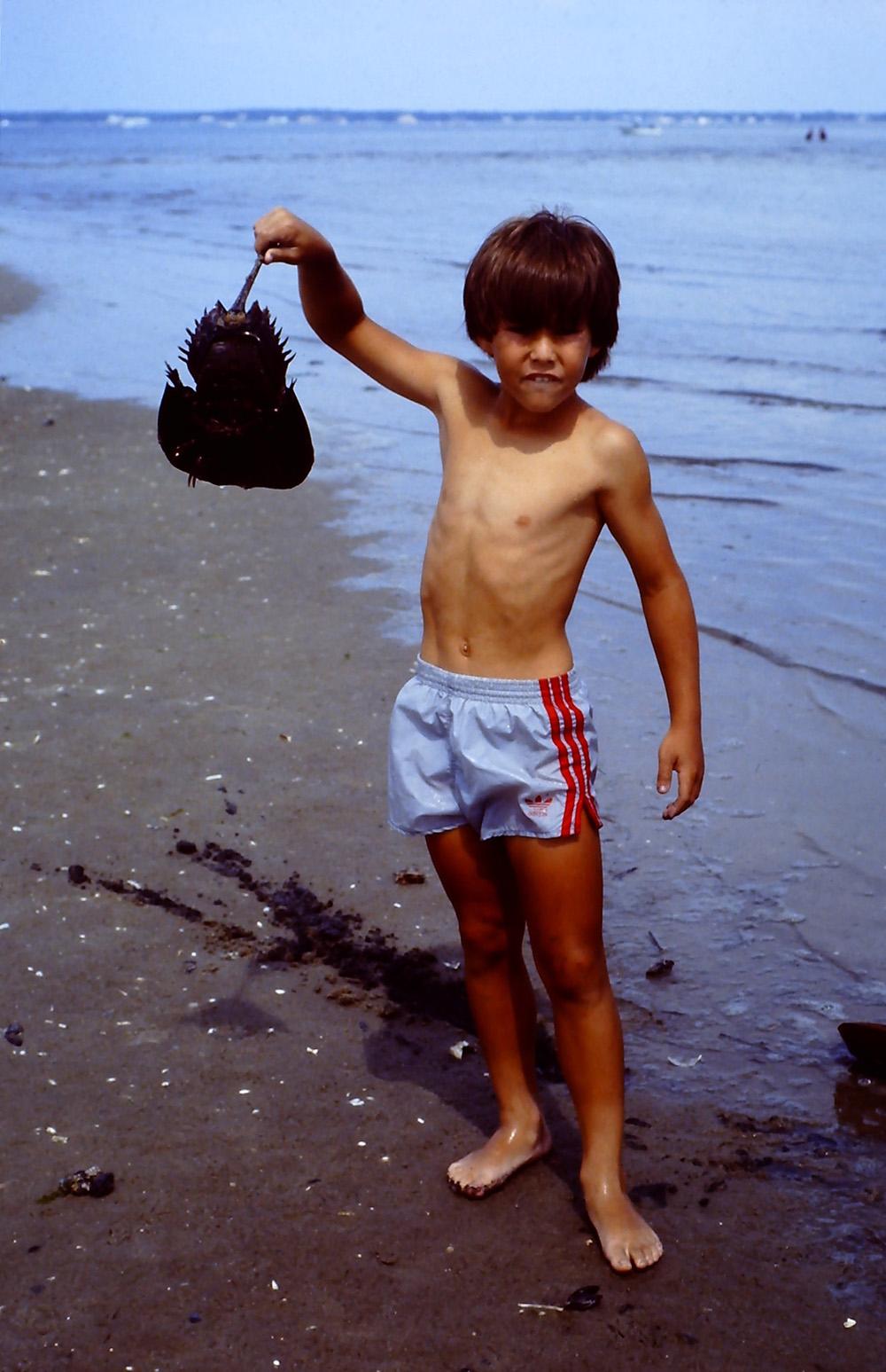 holding a dead horseshoe crab