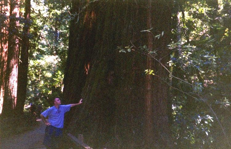 biggest damn tree I've ever seen