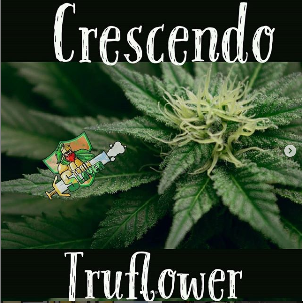 crescendoflower.PNG
