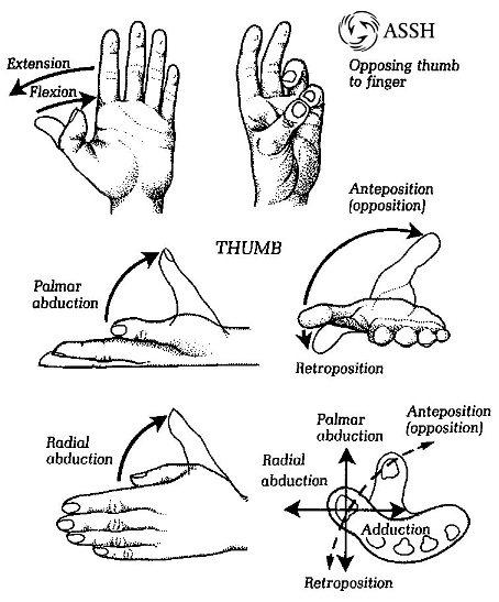 hand_Movement2.jpg