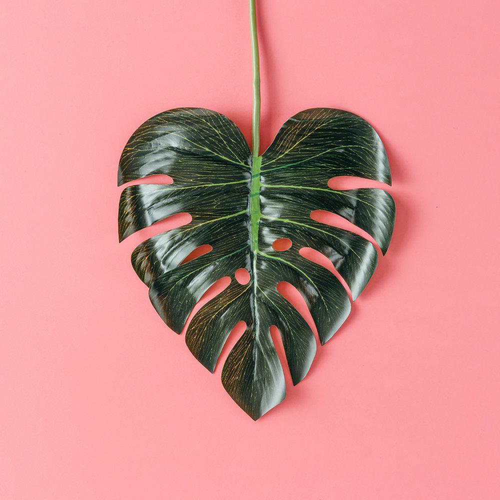 Canva - Tropical Leaf in Shape of a Heart.jpg
