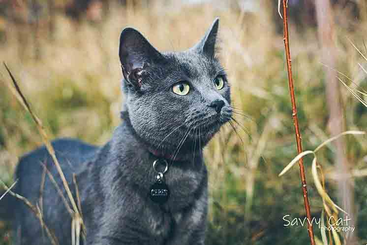 Ceres the adventure cat.jpg