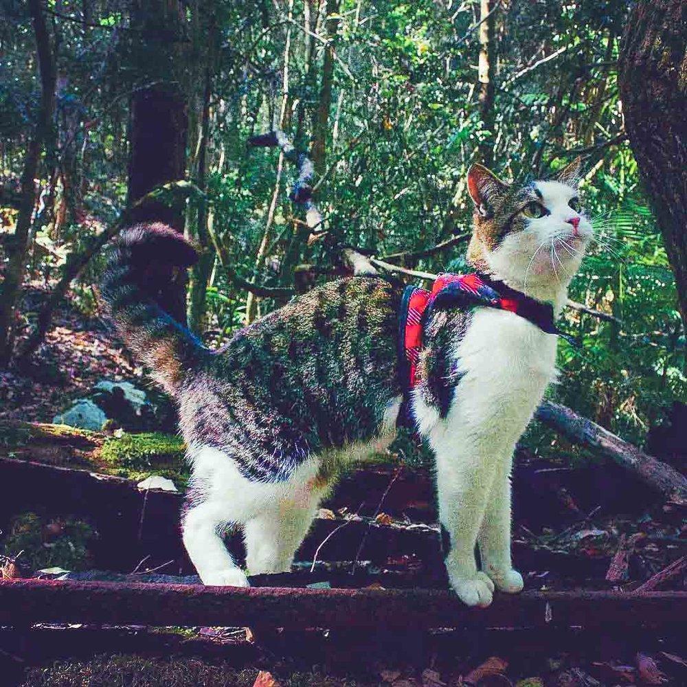@hellopistachio at Wang Wauk State Forest
