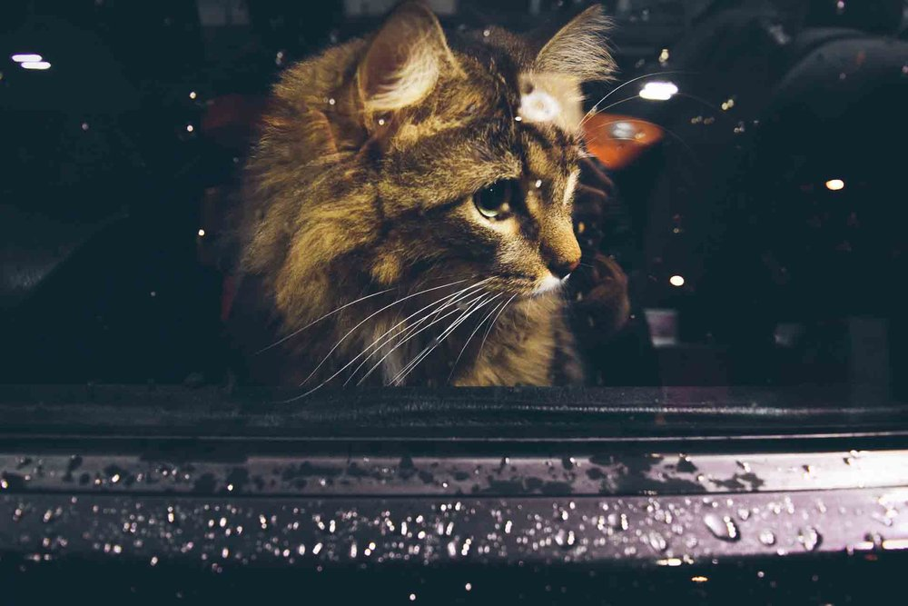Not all cats have to be sad about travelling in cars