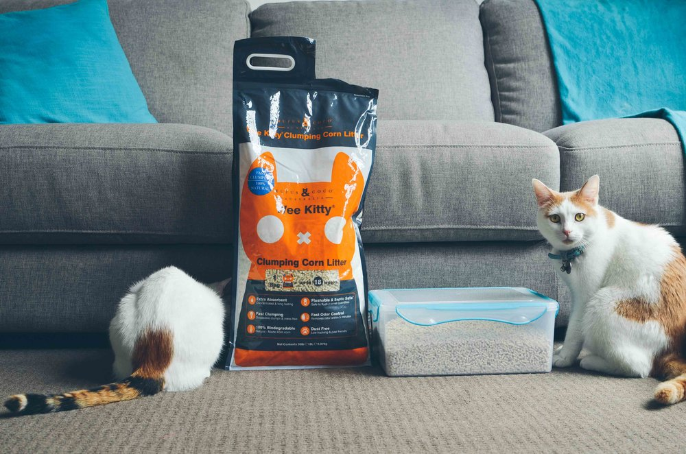 Lumos & Noxie with their cat litter