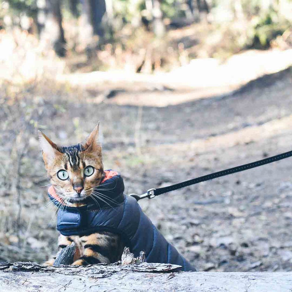 @roxythe_kitty is a cat!
