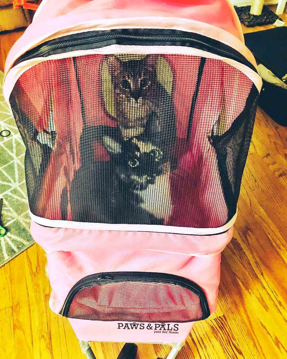 @the.hun.buns in a Paws & Pals stroller