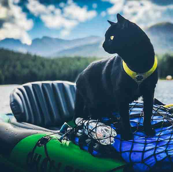 @backpackingkitty enjoying a kayak ride