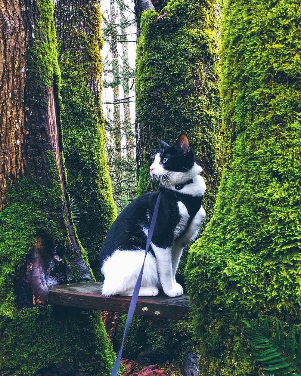 @kiwi_adventure_cat