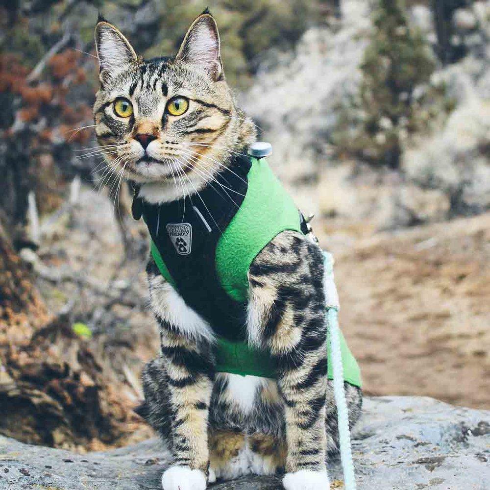 @o.g.adventurecat