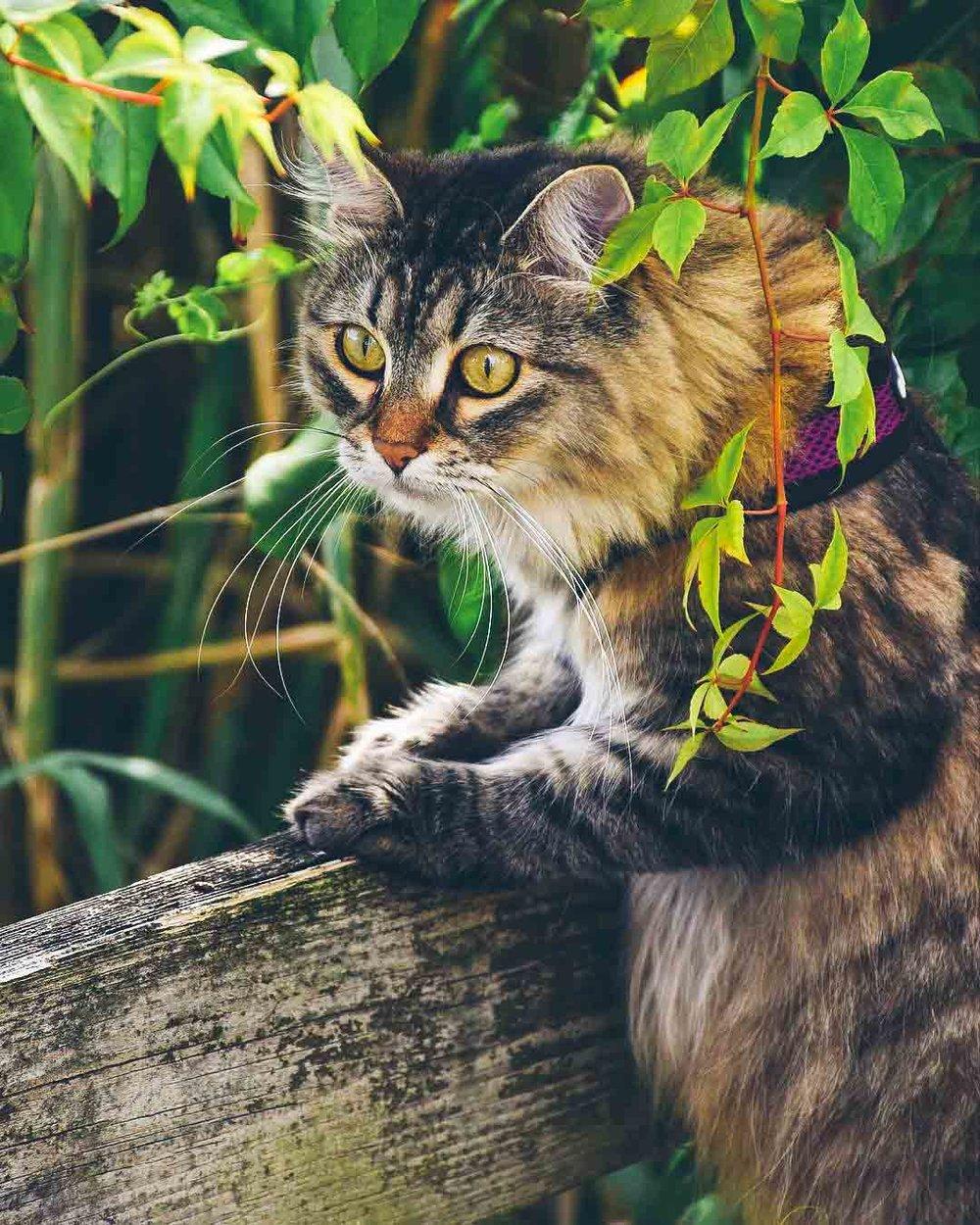 @shishi.haku.lovecats