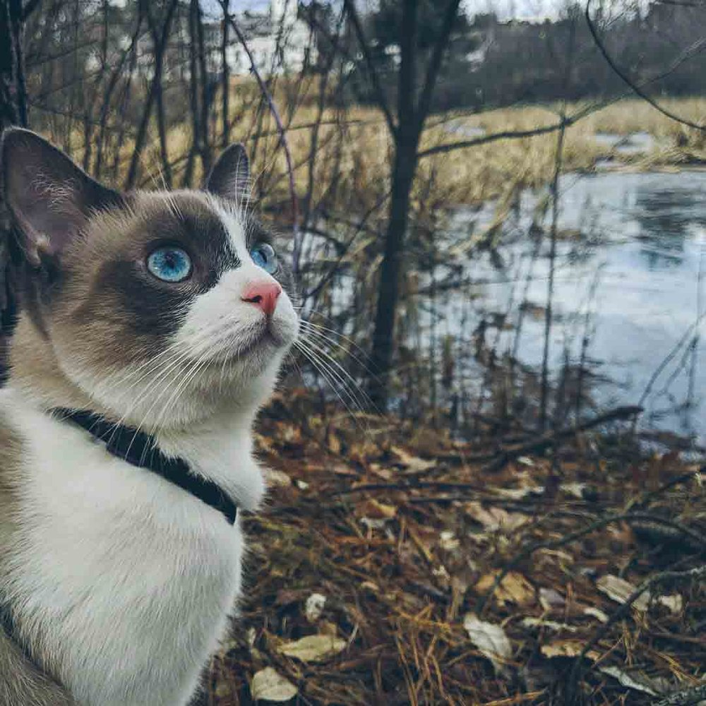 cat by river.jpg