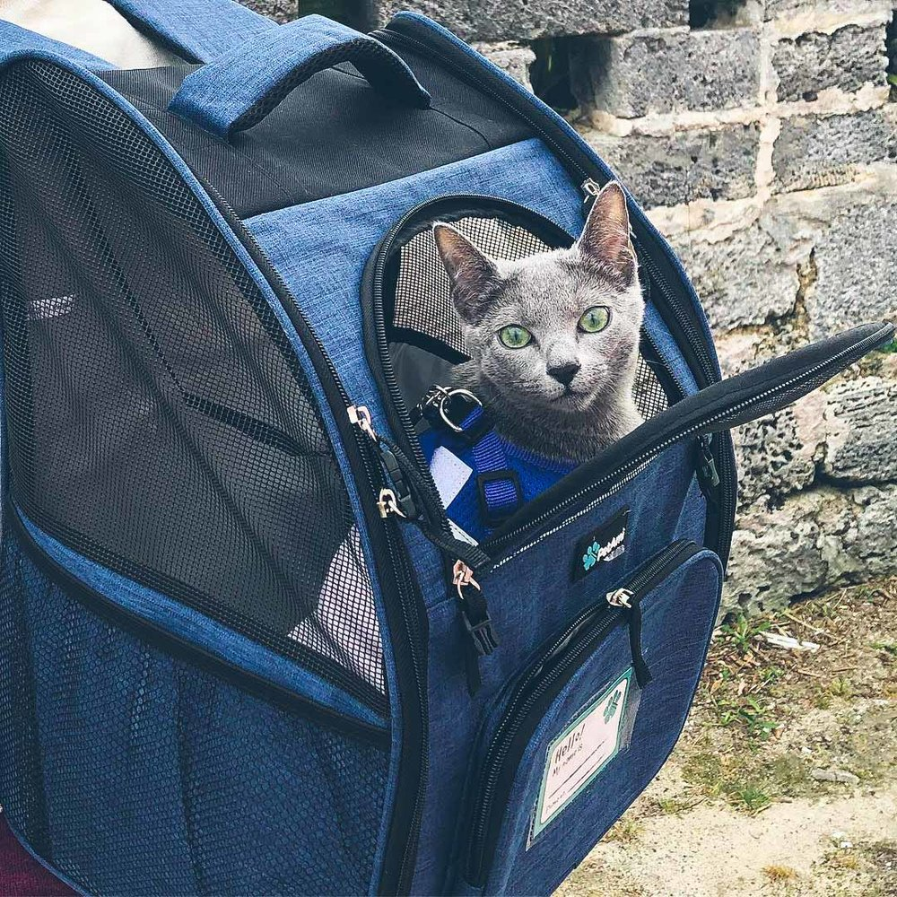 5364a93b03 Cat Backpacks for Adventuring with Your Cat — Catexplorer
