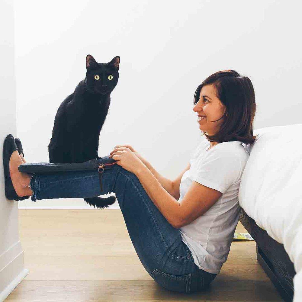Cat School - Cat Training