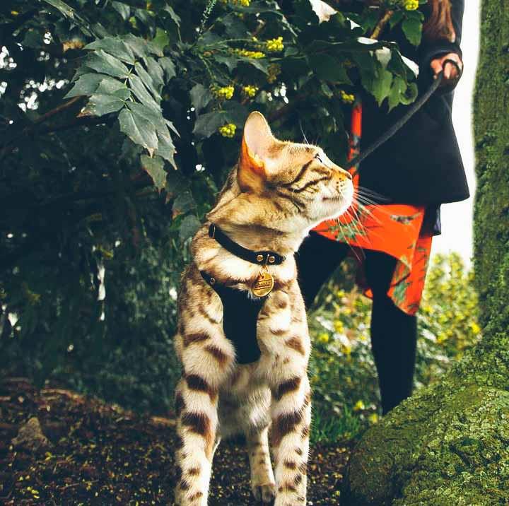 Supakit - Cat Harnesses
