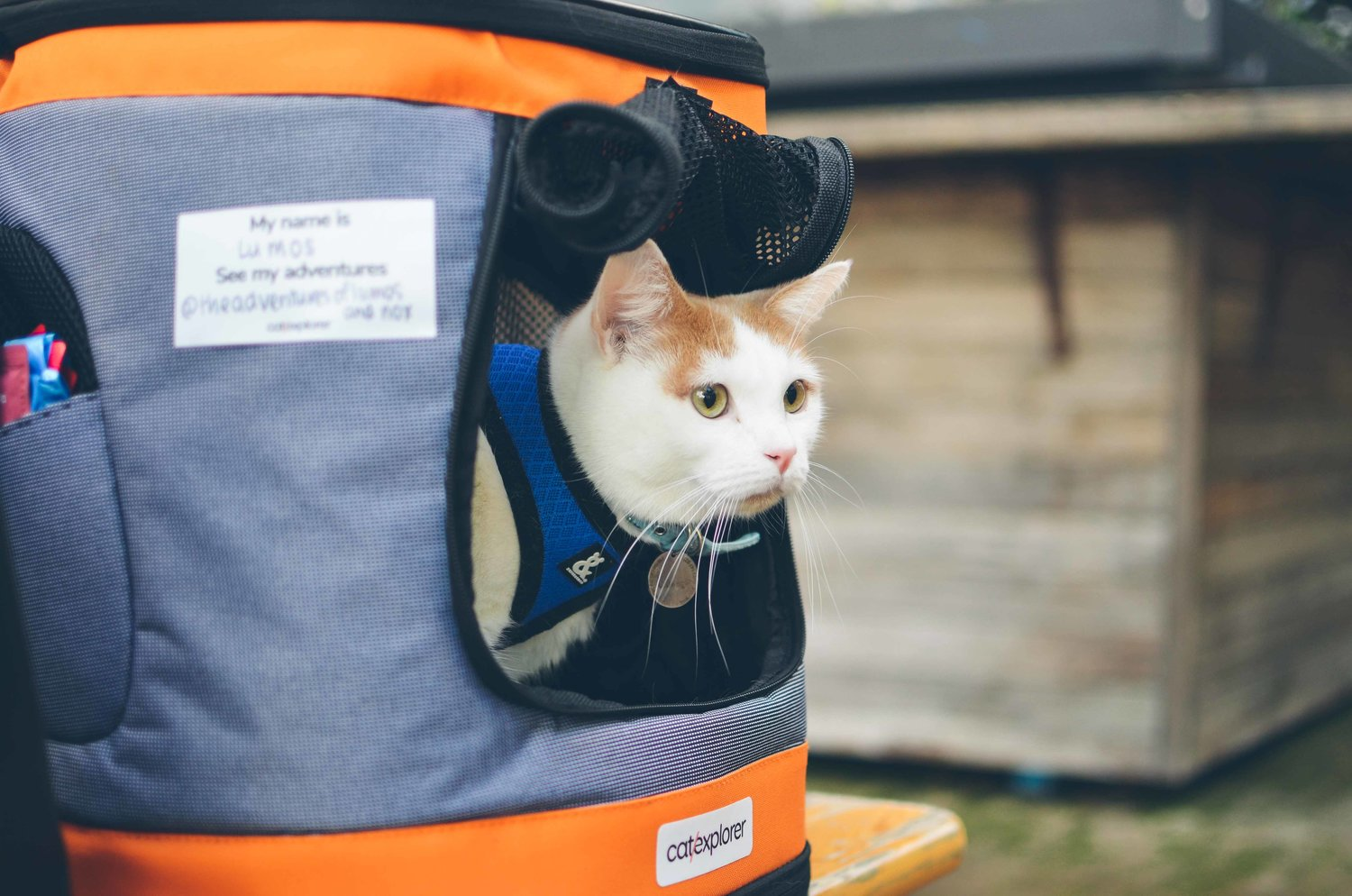 0b575a9210 Training Your Cat to Use Their Cat Backpack for Adventuring — Catexplorer