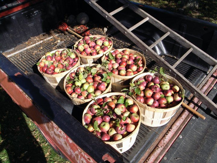 Orchard Picking