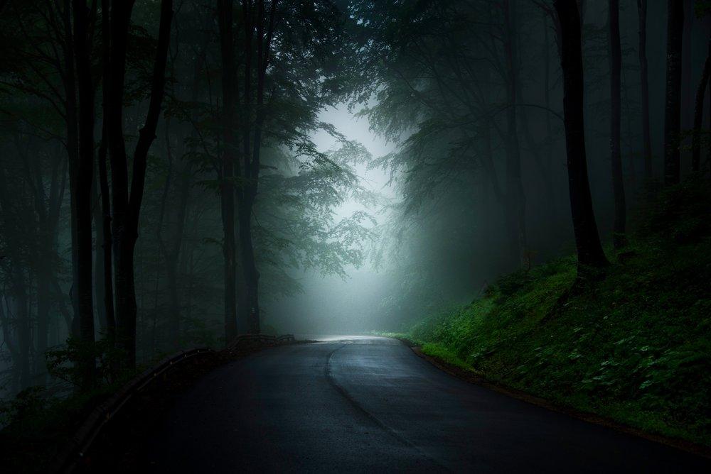Foggy trees-1.jpg