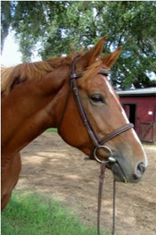 Name:  Sweetgirl  Breed: Oldenburg Mare Date of Birth: 2009 History: Hunter/Jumper  Owned by Bonnie Kelly