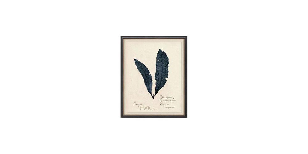 Seaweed_Study_1_960x960.jpg