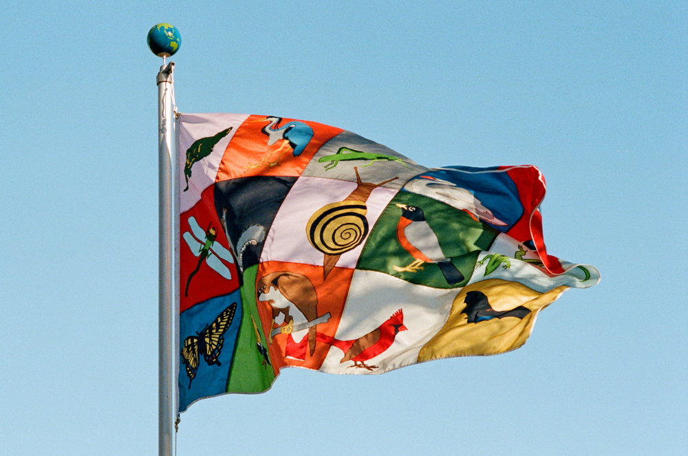 Flag4.png