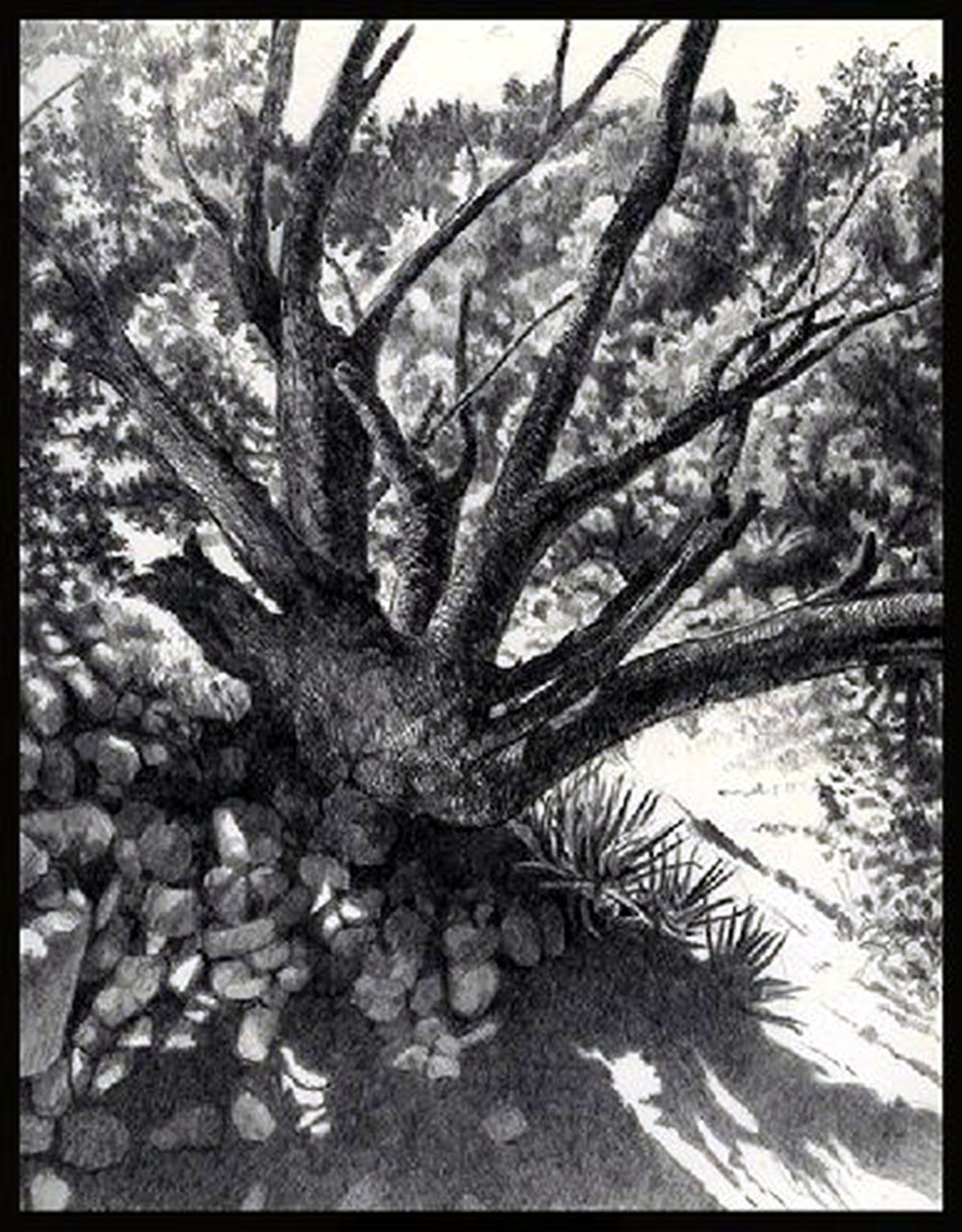 387_Sedona_Tree_HR.jpg