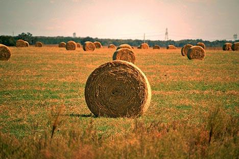 20110308-hay-field-florida.jpg