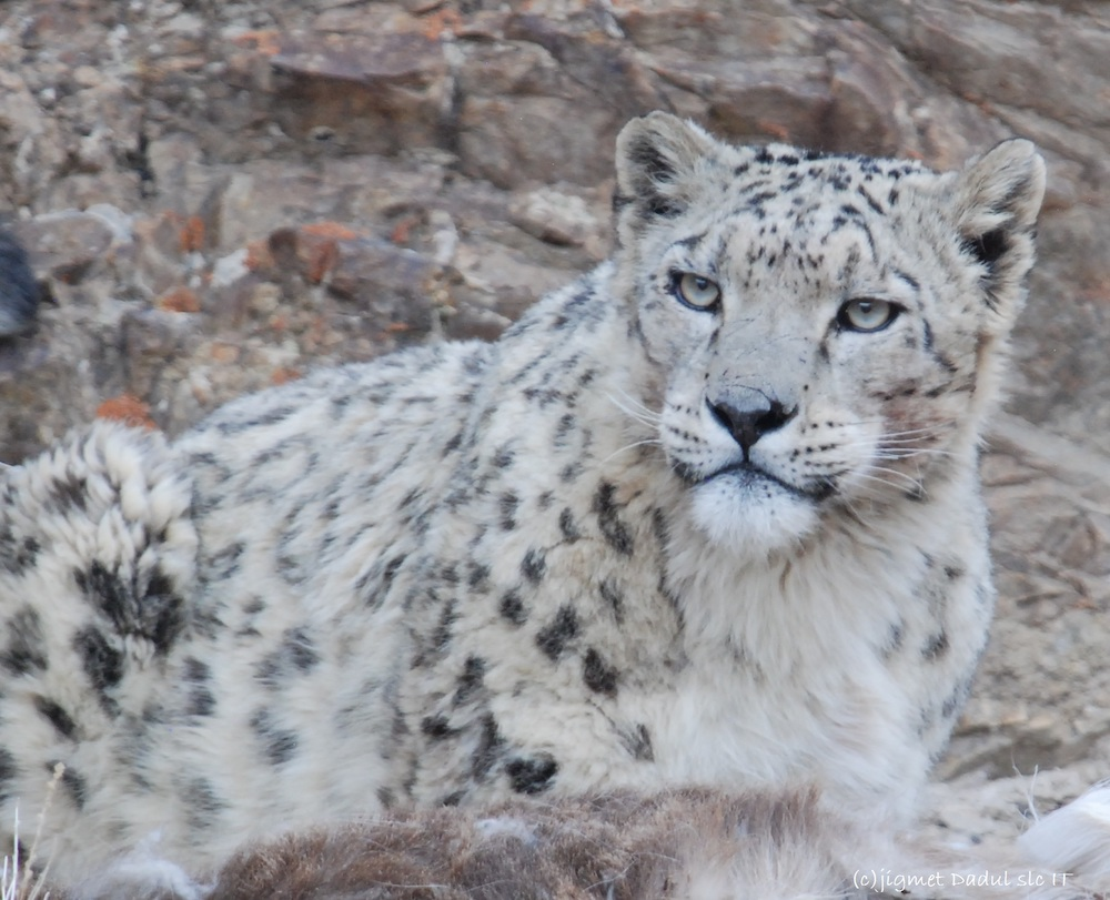 Community development with the Snow Leopard Conservancy India Trust