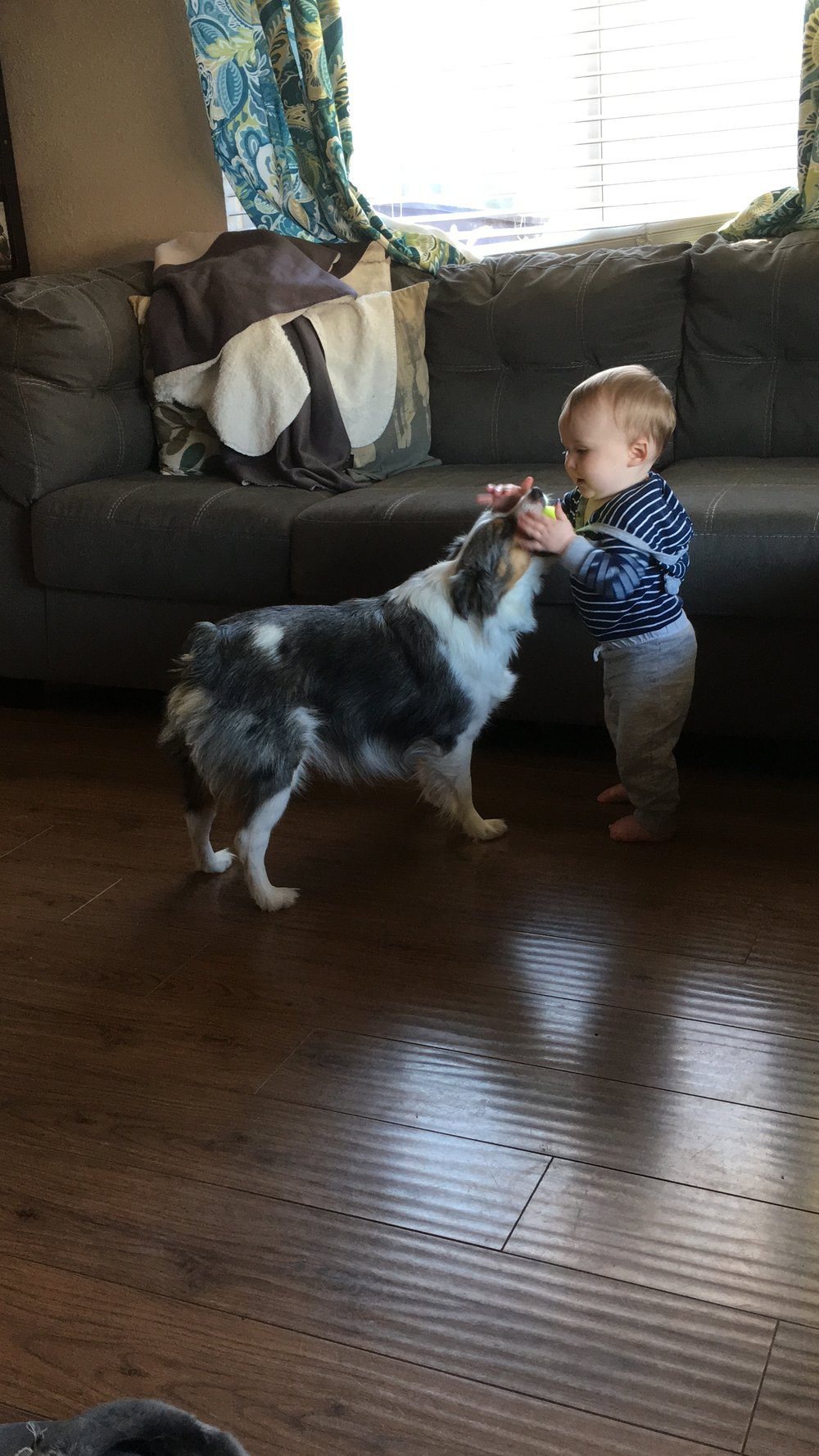 William started walking this week so he's been chasing around Dawson. Dawson is so patient with him and is constantly offering him balls to throw.