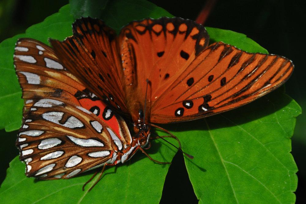 Butterfly Romance - 2008
