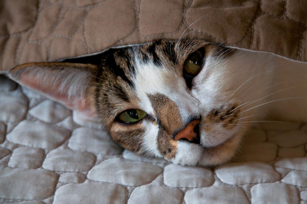 Hobie Cat - 2012