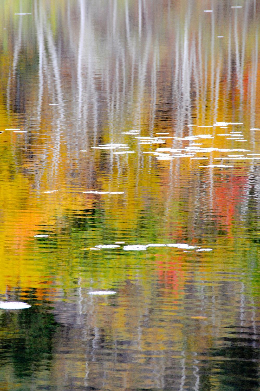 Autumn Palette - 2009