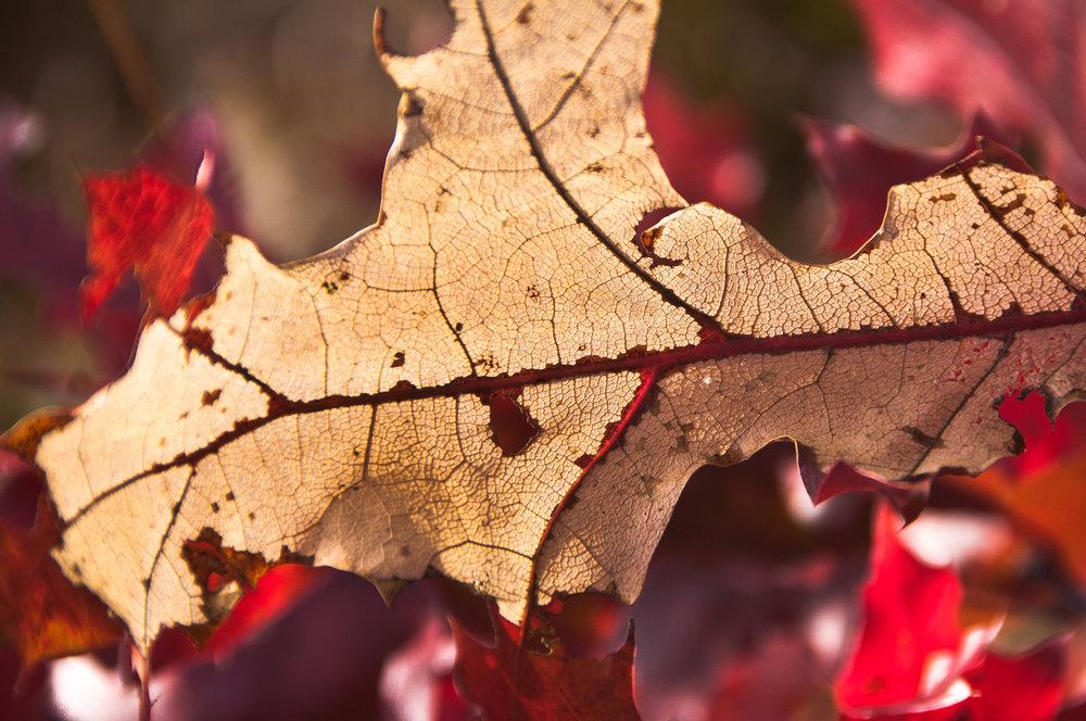 Autumn Decadence - 2012