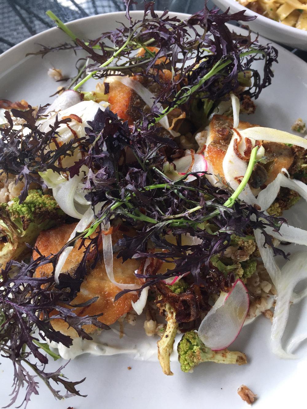 Line caught market fish, spiced cauliflower and organic barley salad, labneh, lemon vinaigrette