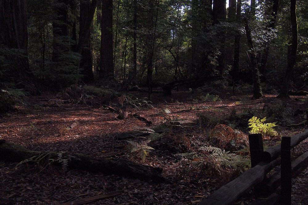 henry-cowell-state-park_24369516847_o.jpg