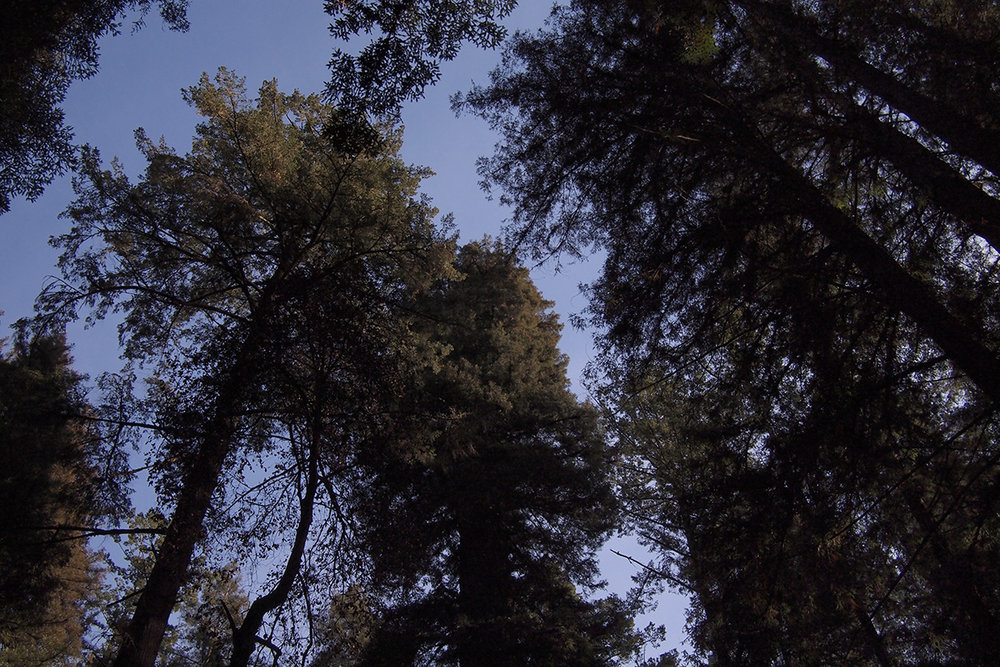 henry-cowell-state-park_38523794084_o.jpg