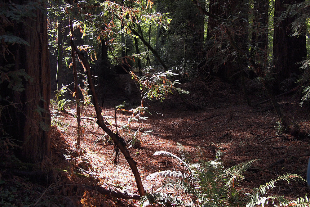 henry-cowell-state-park_38523794404_o.jpg