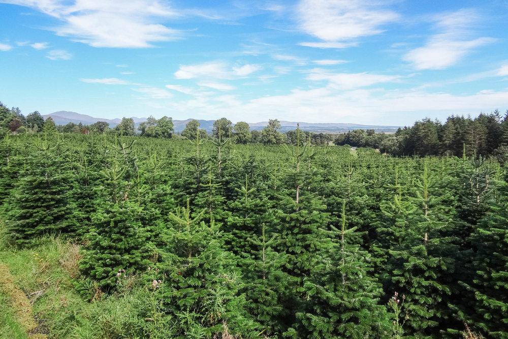 Duff-Tress-Christmas-Tree-Farm-028.jpg